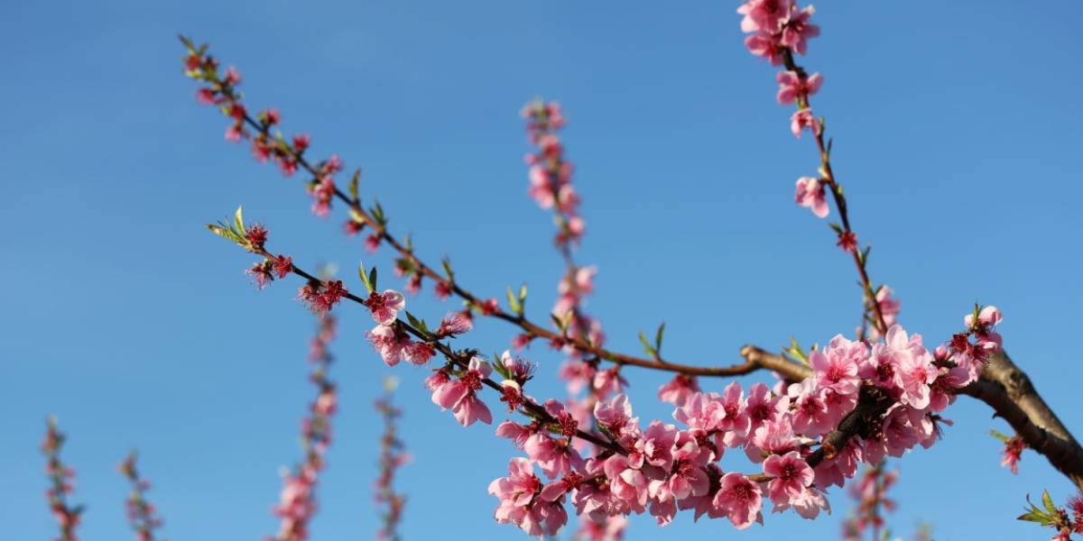 Els colors de la primavera