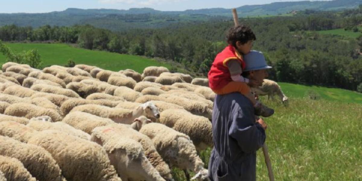 Una mañana con el pastor