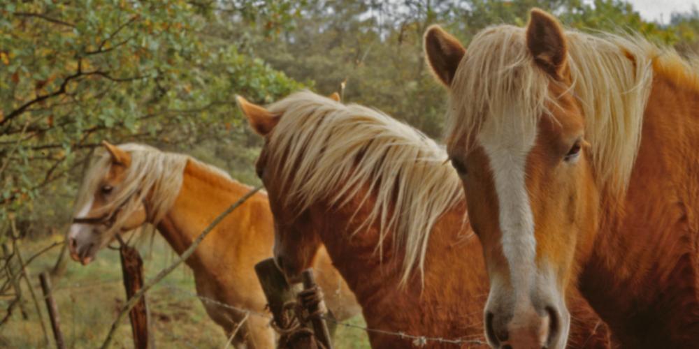 Activitats amb cavall