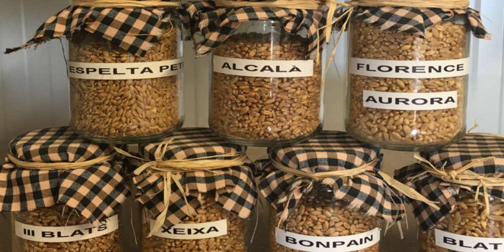 Josep Mestre: cereals i llegums, com abans