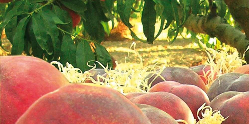 De la Maria: Fruites i verdures ecològiques i a domicili