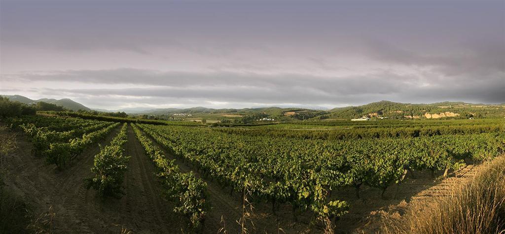 Las viñas de la Anoia